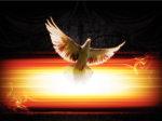 Picture of dove
